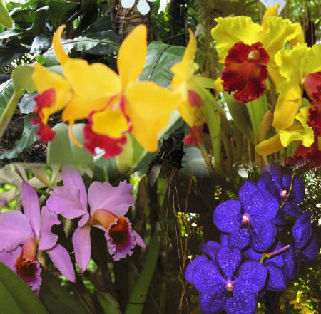 site-orchids_1.jpg