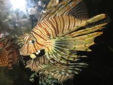 aquarium-036_1.jpg
