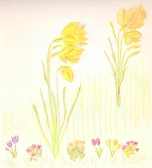 MW Daffodils