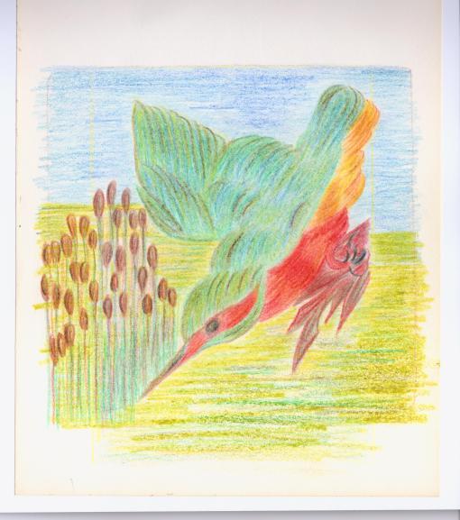 MW Kingfisher2